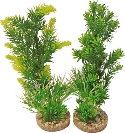 AQUARIUM PLANT 349701